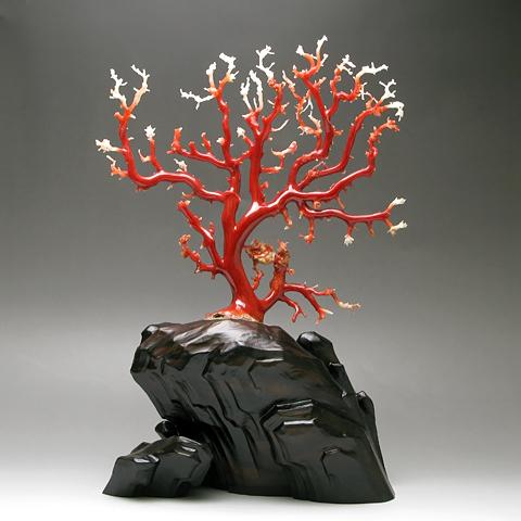珊瑚の大きさ 約縦17×横19センチ