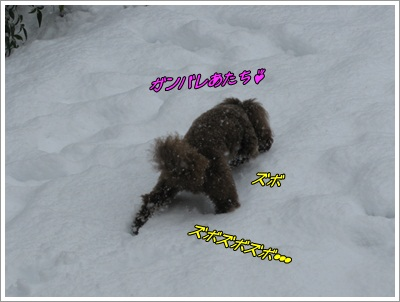 002_20120301091101.jpg