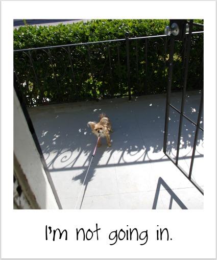 Bambi12711-1.jpg