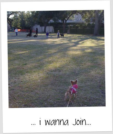 bambi12111.jpg