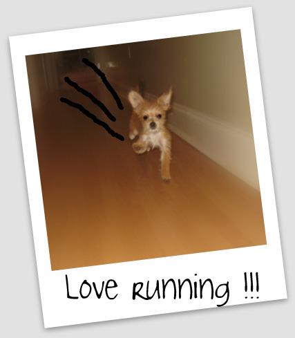 bambi5210.jpg