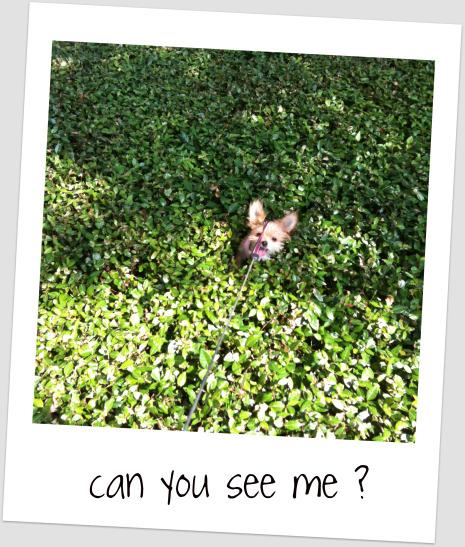 bambi52910.jpg