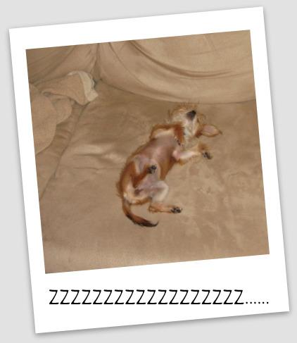 bambi5710.jpg