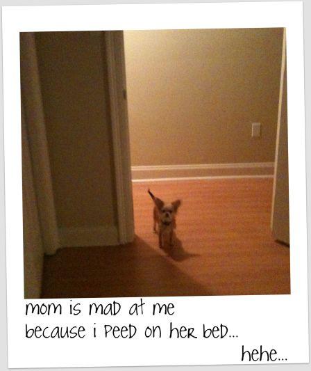bambi80510.jpg
