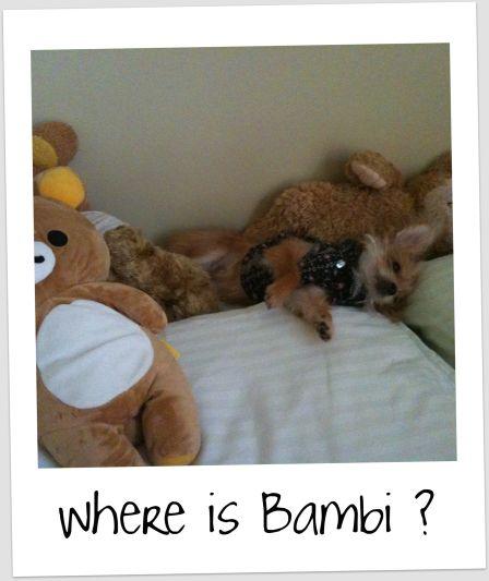 bambi92610.jpg