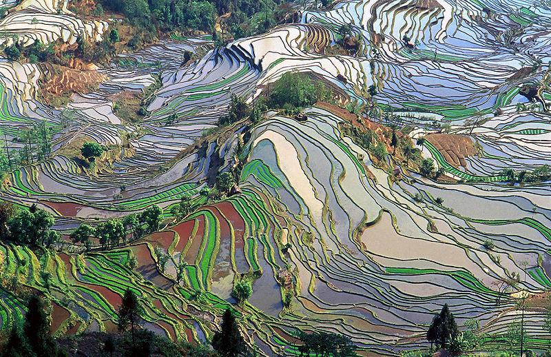 中国雲南 棚田