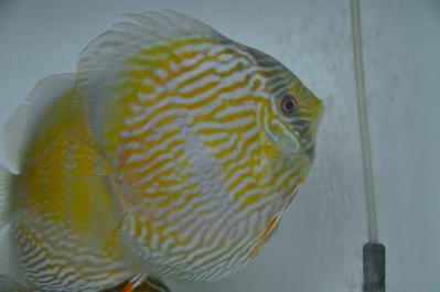 2012-12-2グアリバ2