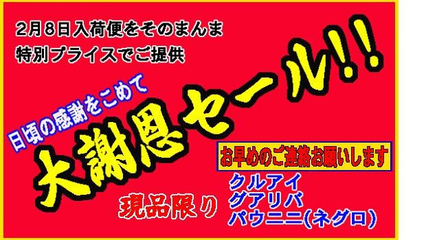 2013-2-8謝恩セール