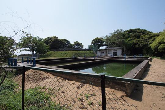 20110505_hizen_nagoya_castle-74.jpg