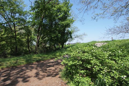 20120505_hachigata_castle-67.jpg