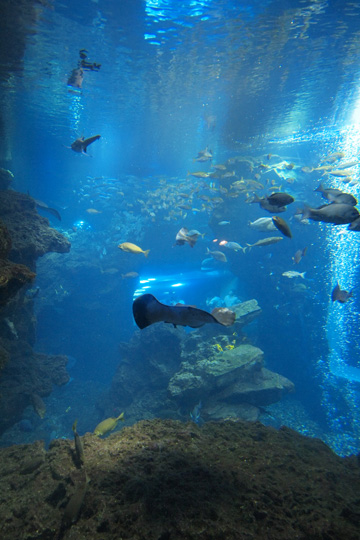 20120902_kyoto_aquarium-04.jpg