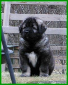000+puppies+0341_convert_20121122100534.jpg