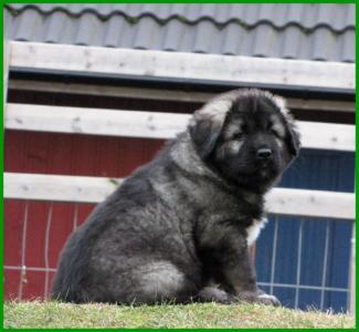 0001+puppies+0385_convert_20121122101333.jpg