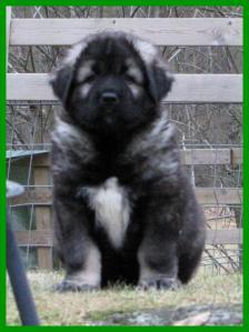 001+puppies+0354_convert_20121122101156.jpg