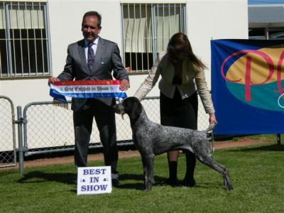 BIS Pic Hobart Royal Show