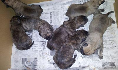 2012-01-24 20.52子犬
