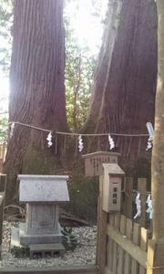 2011-12-12 15.13夫婦杉