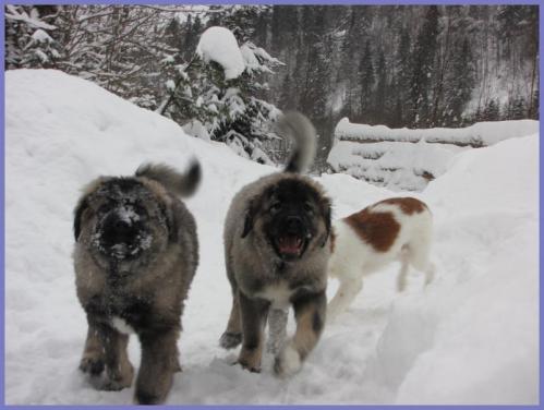 puppies+juleaften+009_convert_20121225102851.jpg