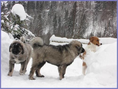 puppies+juleaften+028_convert_20121225103421.jpg
