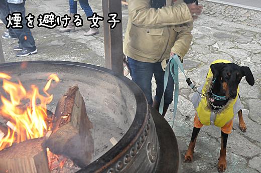 01jan13kumanonachi04