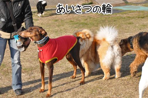 03jan12azuki03