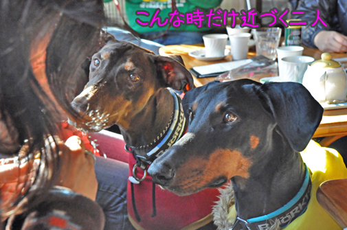 03jan12riru&azuki01a