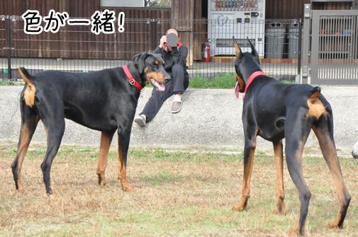 05nov11kotetsu&yukichi01