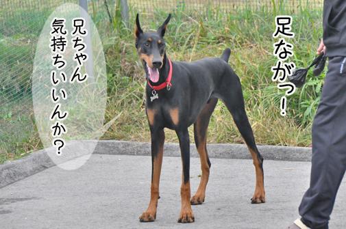 05nov11yukichi02