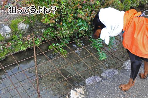6nov11shirakawago06