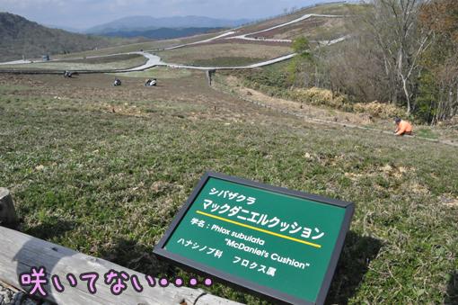 10may12chausuyama09