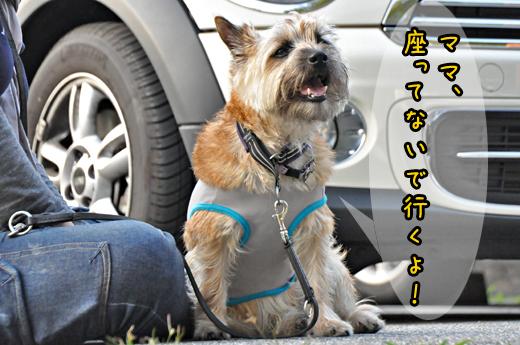 14jun12korosuke02