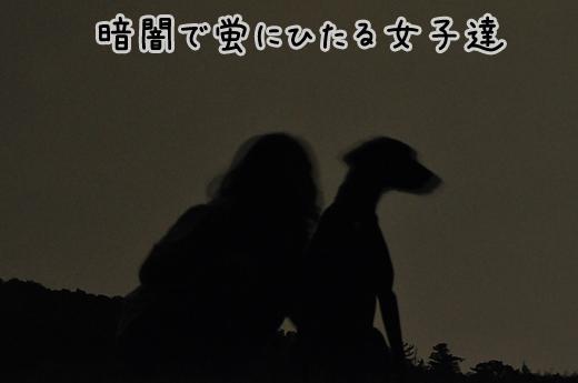 23jun12hortaru02