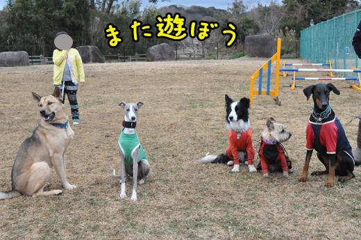 29dec12alldogs01