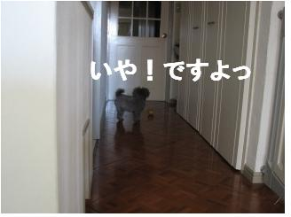 dog,のん