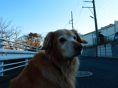 12-12raichi2d.jpg