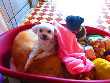 11-11看板犬d