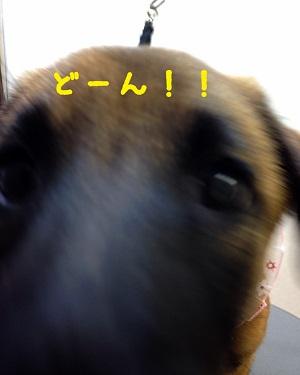 11_20140921204550d74.jpg