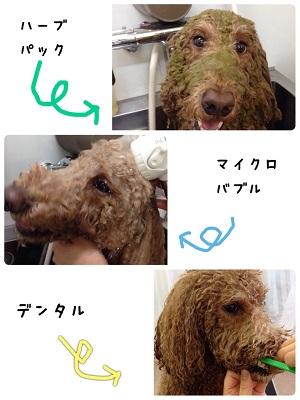14_20141110211455abf.jpg