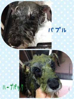 ナッツ入浴_convert_20141102002052