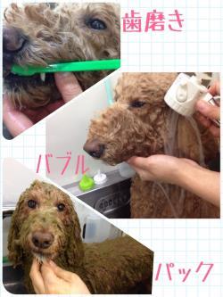 リンジー入浴中_convert_20141102002308