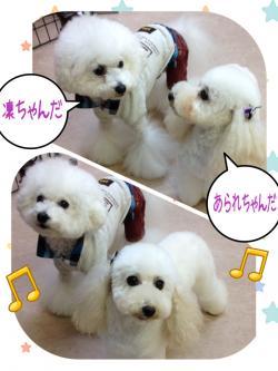 凜さん_convert_20141102002351