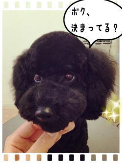 さぶちゃん_convert_20141108224505