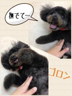 ポムちゃん_convert_20141205134037