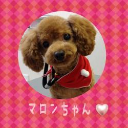 マロンちゃん_convert_20141207223209