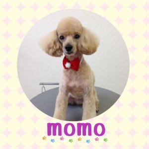 モモちゃん_convert_20141221221918