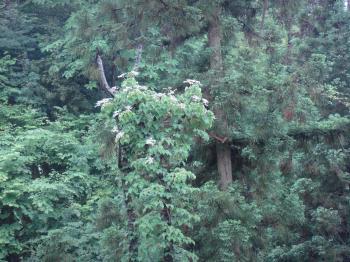 勝成山いこいの森