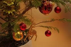 2012 クリスマスツリー ★