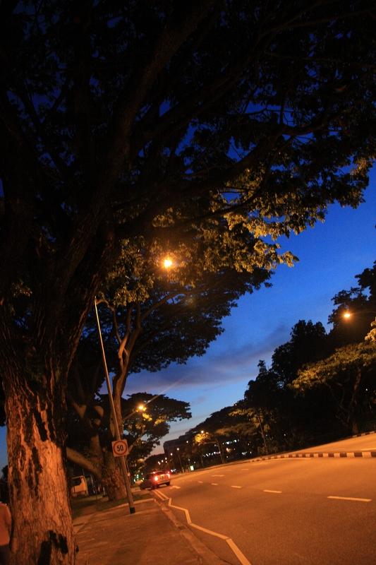 シンガポールの夜の道3