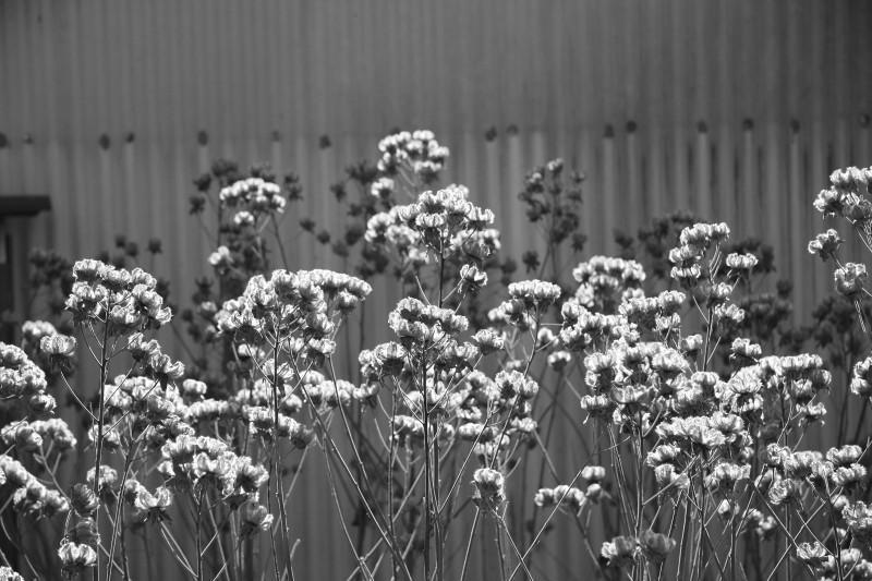 寂しげな花