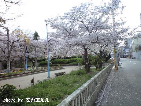 10.04桜2、CA391004
